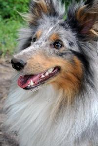 ein Foto aus meinem ersten Hundeshooting 2014