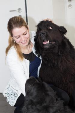 Neufundländer Wilson und Olivia