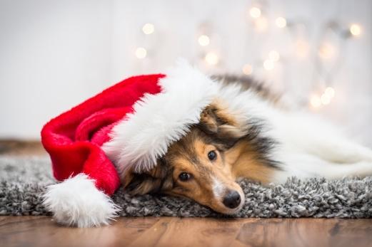 Hund mit Weihnachtsmütze.jpg