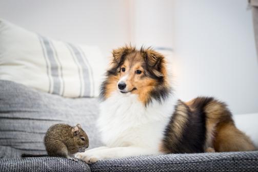 Hund und Degu