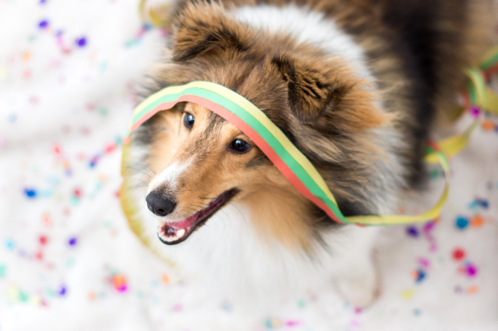Silvesterfotoshooting Hund
