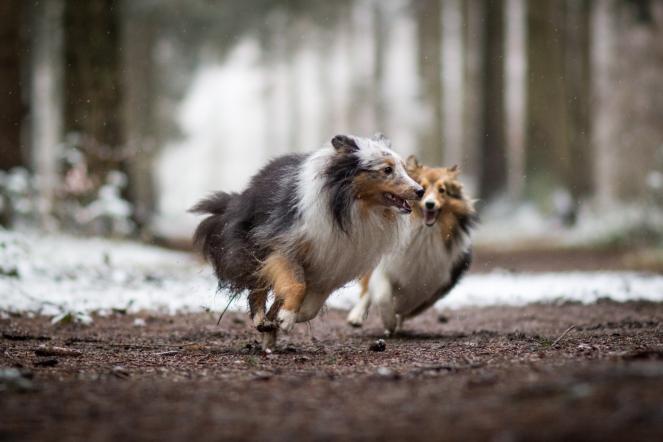 Wie Hunde spielen