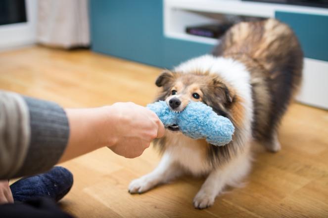super Zerrspielzeug für Hunde