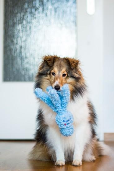 Hundezerrspielzeug im Test