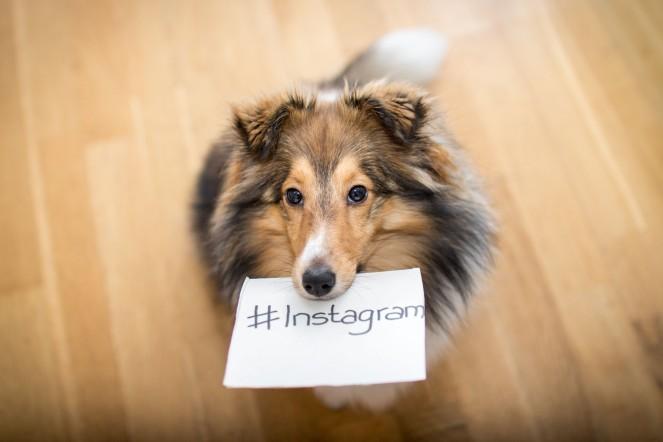 Hundeaccount auf Instagram