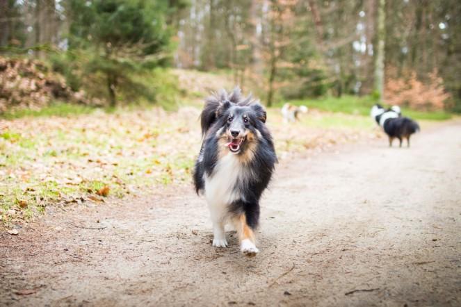 Hund und Gesichtsentgleisungen