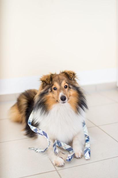 Hundeblog verlost Leine und Halsband