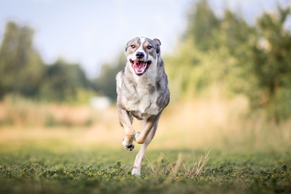 Actionfotos vom Hund