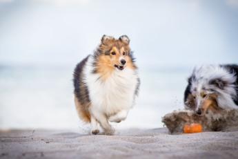 Ball spielen am Strand