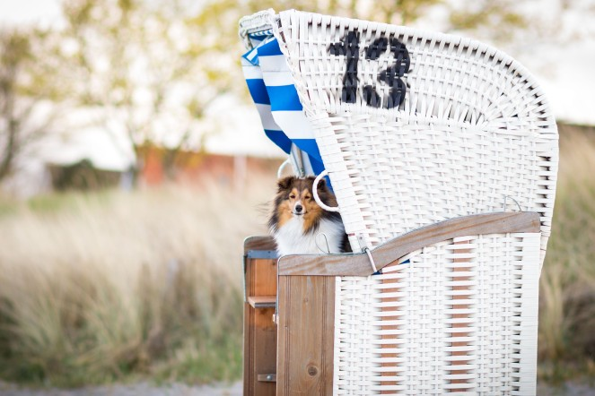 Hund im Strandkorb an der Ostsee