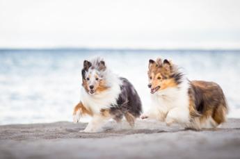 Hundewettrennen