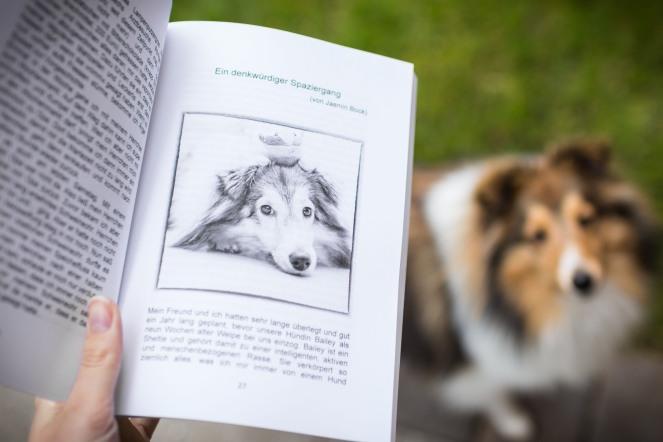 Sheltie Bailey im Buch