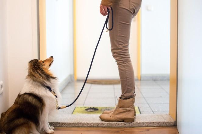 einem Hund das Warten beibringen