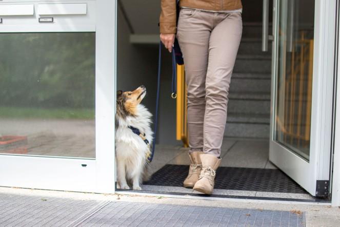 Wie verlässt man mit Hund das Haus