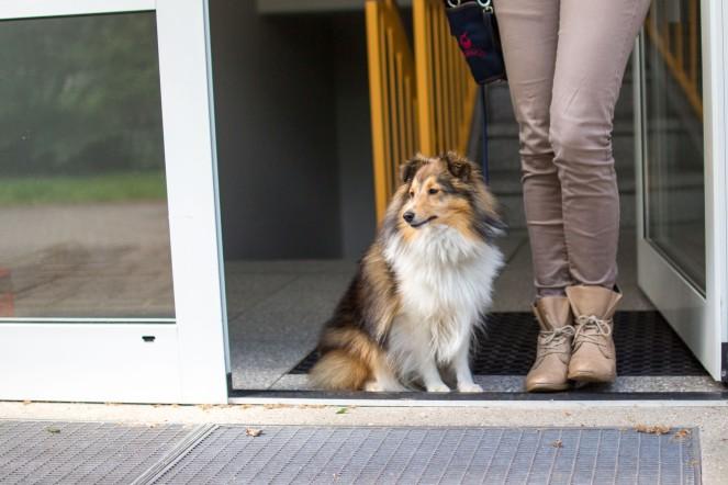 Hund in der Mietwohnung bedeutet Rücksichtnahme