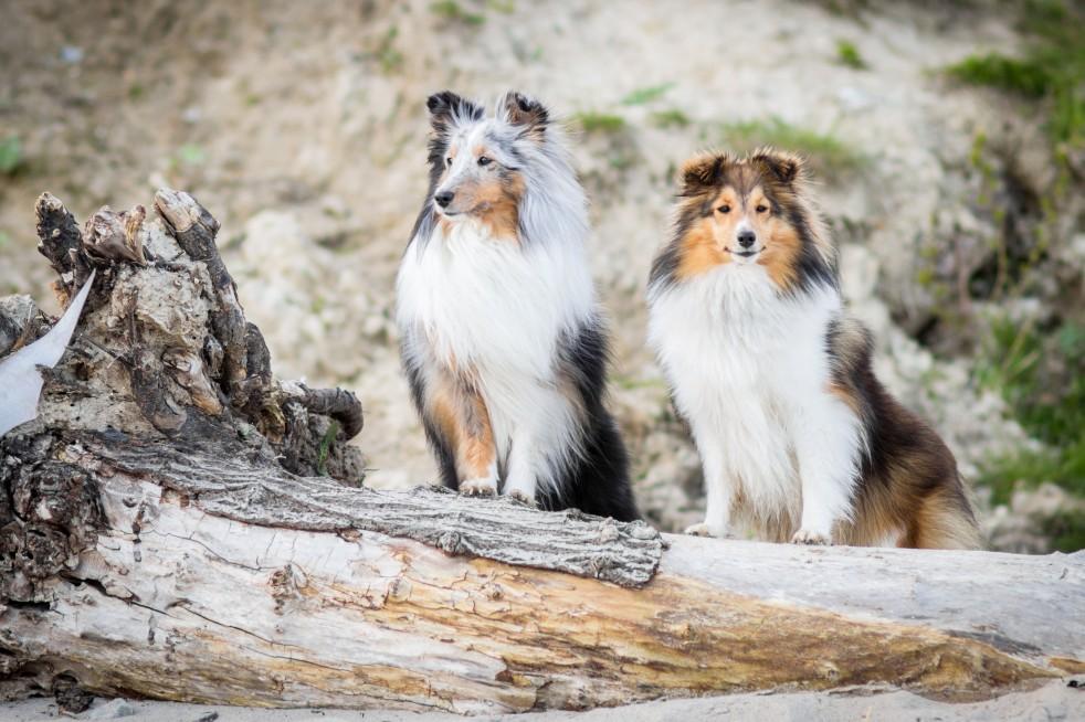 Hunde im Hansapark Resort