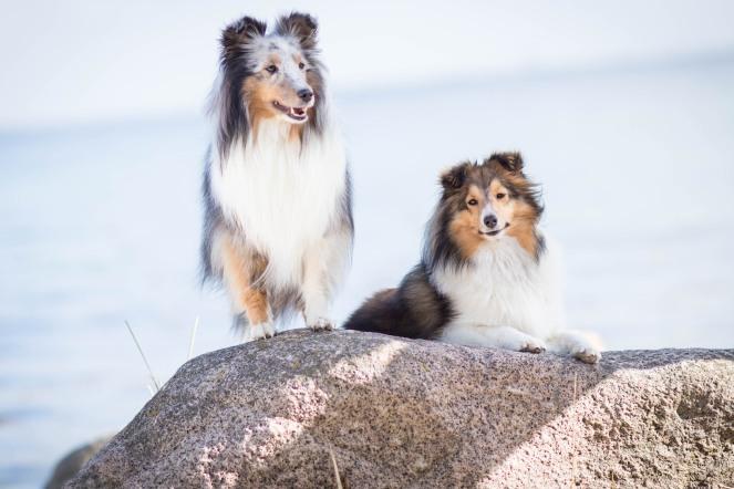 Instagram Hundestars