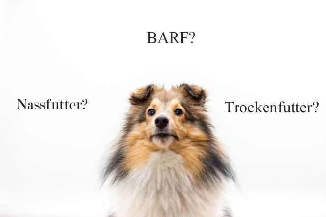 Welche Hundeernährung ist die richtige?