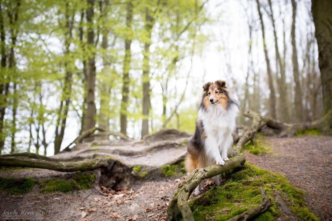 Fotoshooting beim Tierfotografen