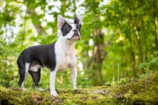 Welches Objektiv für Hundefotografie