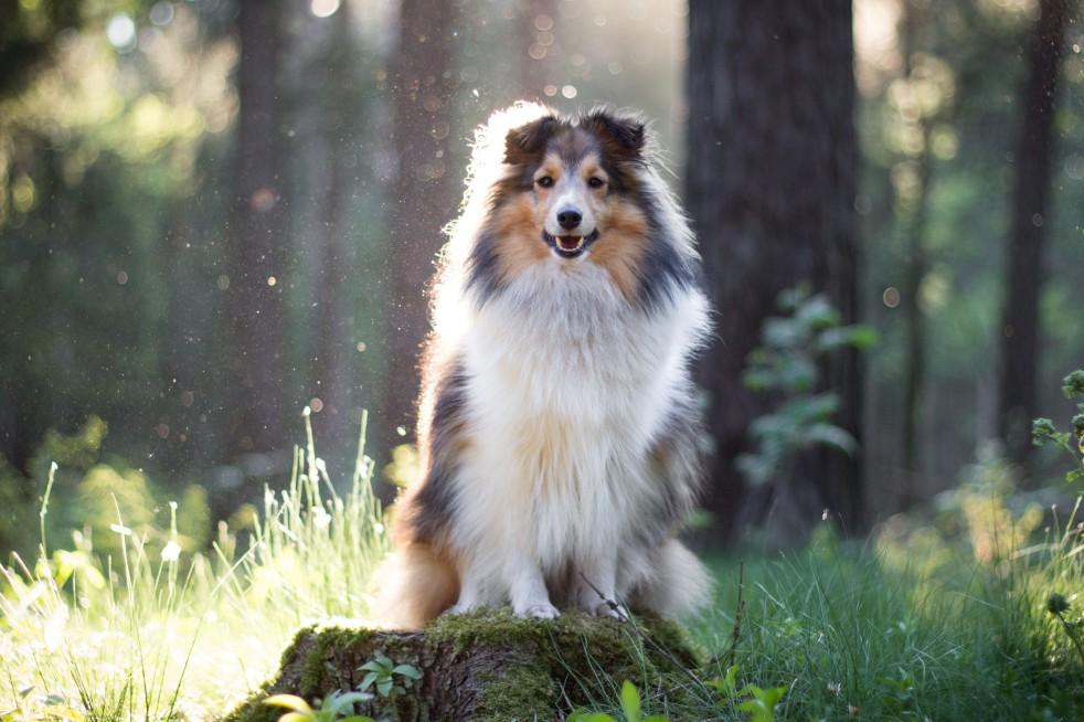 Waldbild mit Hund / Hundefotografie mit Canon