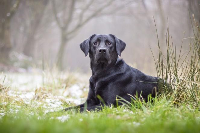 Hunde bei schlechtem Wetter fotografieren