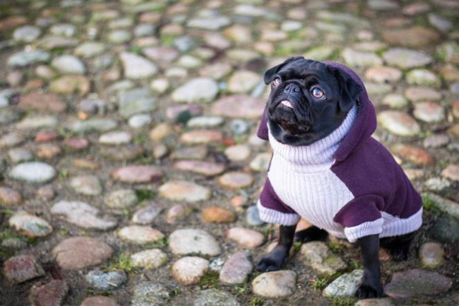 Einsteigerobjektiv für die Hundefotografie