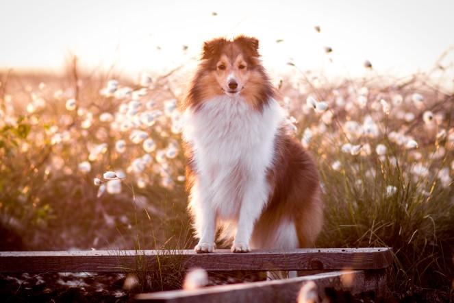 Geht ein Hund trotz Beruf?