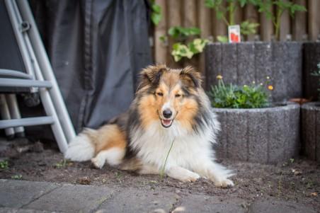 Bailey im Garten