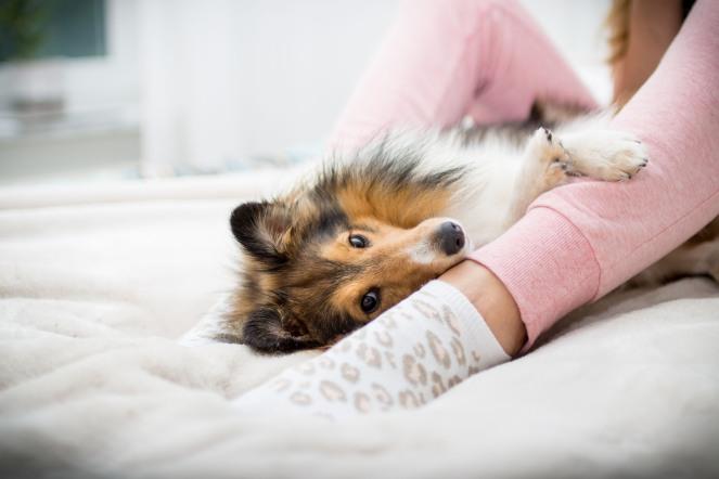 Hund allein lassen wie lange?