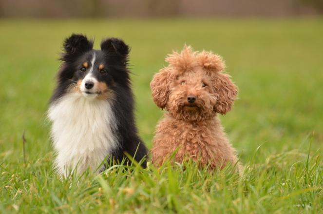 kein Hunderassist sondern Freunde
