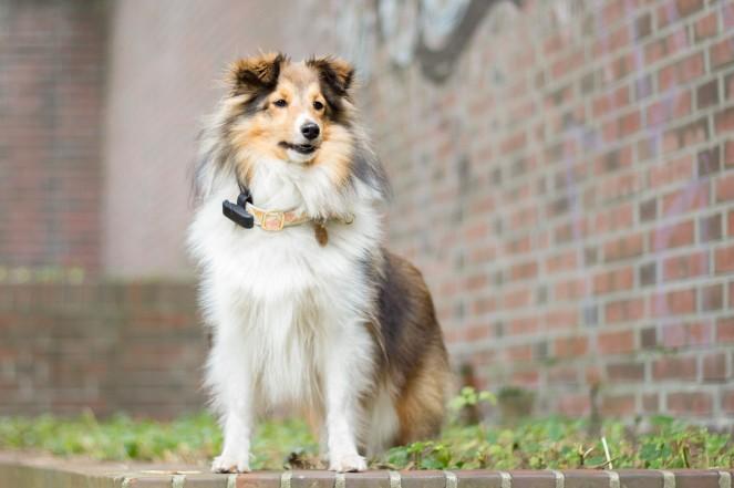 Tractive Motion passt auch kleinen Hunden