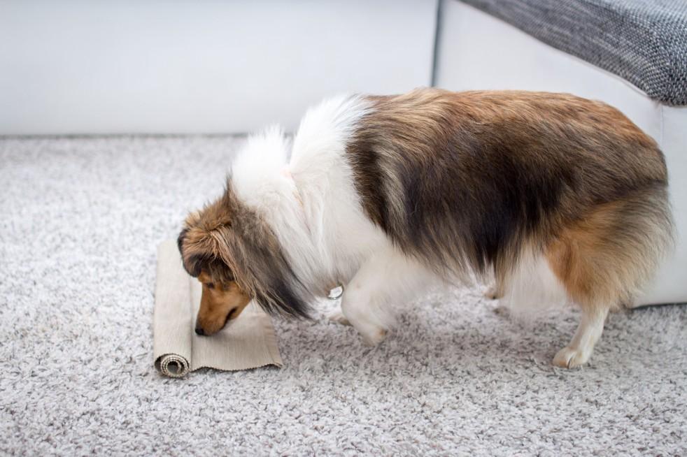 Indoor Beschäftigung für Hunde