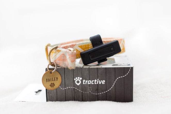 Tractive Motion Erfahrungsbericht Blogger