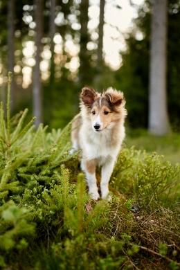 Fotografen Hund Malia