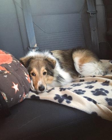 In den Urlaub fahren mit Hund
