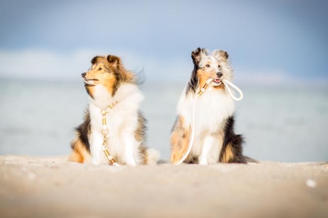 Hundeleine am Strand