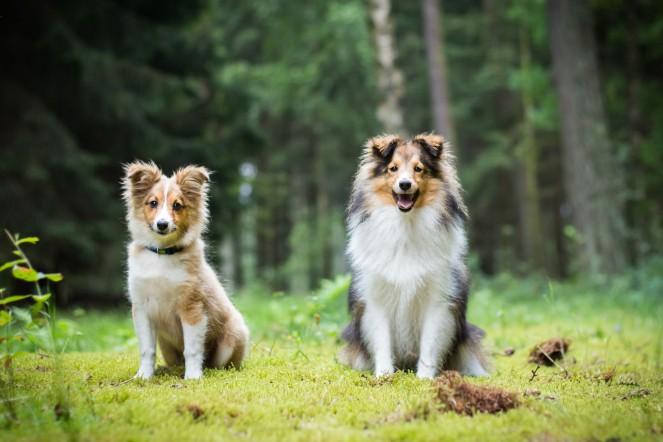 Rauschen bei Hundebild entfernt