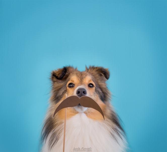 Hund im Studio mit Bart Accessoire