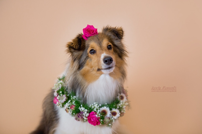 Hund mit Blumenkrank geschmückt