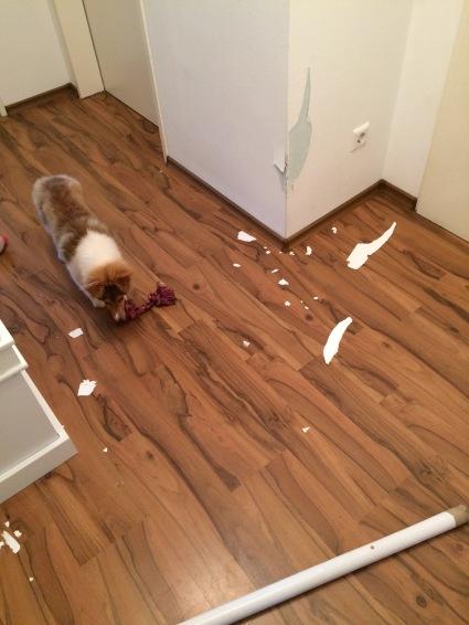 Hund zerstört Gegenstände