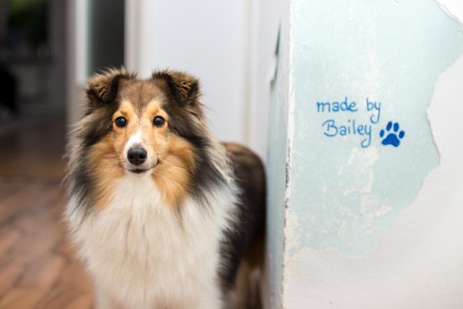 Was tun, wenn der Hund an die Tapeten geht?