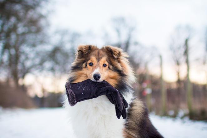wie bringt man einem Hund das Halten bei