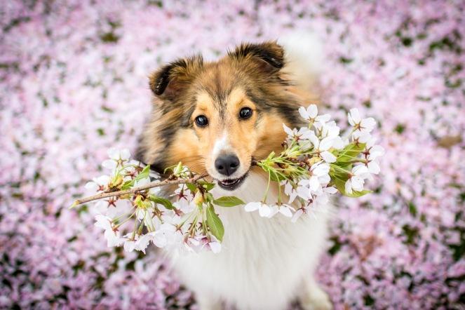 Frühlingsshooting mit Hund