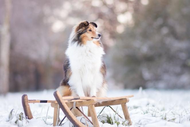 Fotoshooting mit Hund im Schnee