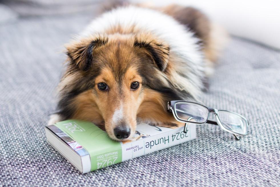 Lesetest Hundebuch Hundeblog