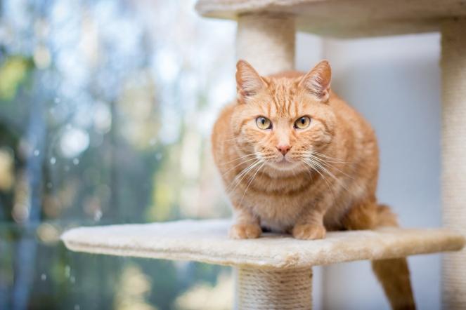 Fotoshooting mit einer Katze