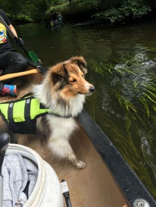 auf der Alster mit Hund Kanu fahren