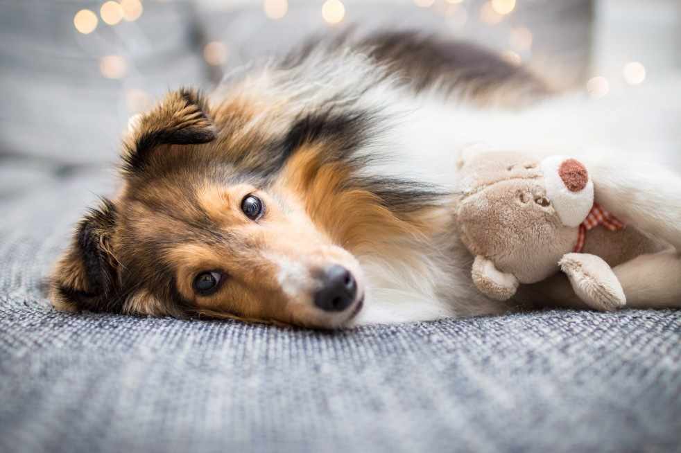 Foto vom Hund auf der Couch