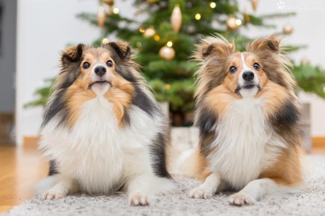 zwei Hunde fotografieren